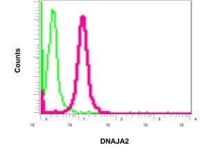 Flow Cytometry - Anti-DNAJA2 antibody [EPR11302(B)] (ab157216)