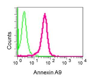 Flow Cytometry - Anti-ANXA9 antibody [EPR11220-11] (ab167402)