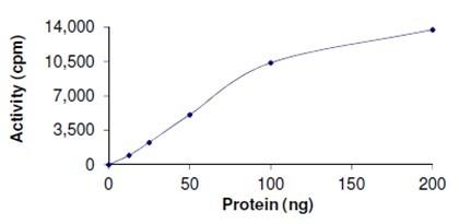 Functional Studies - PRMT1 protein (Active) (ab167927)