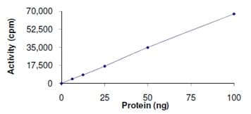 Functional Studies - SETD7 protein (Active) (ab167960)