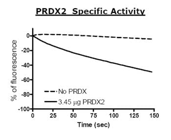Functional Studies - Peroxiredoxin 2 protein (Active) (ab79947)