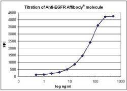 Flow Cytometry - Anti-EGFR Affibody® Molecule FITC (ab81872)
