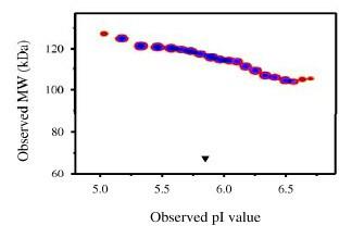 Functional Studies - TrkA protein (Fc Chimera) (ab83562)
