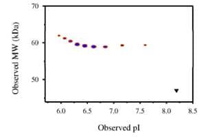 Functional Studies - FGFR4 protein (Fc Chimera) (ab83999)