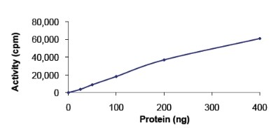 Functional Studies - CDK6 + CCND1 protein (Active) (ab84559)