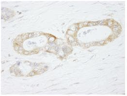 Immunohistochemistry (Formalin/PFA-fixed paraffin-embedded sections) - USP3 antibody (ab84702)