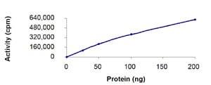 Functional Studies - Recombinant human NAK/TBK1  protein (ab85276)