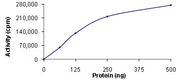 Functional Studies - PHKG2 protein (Active) (ab89857)
