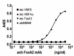 Indirect ELISA - FOXA2 protein (Human) (ab95848)
