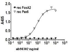 Indirect ELISA - PAX6 protein (ab98302)