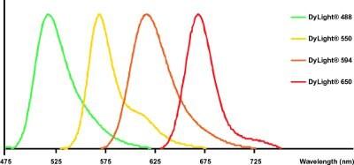 DyLight®-Goat polyclonal Secondary Antibody to Rabbit IgM - mu chain (DyLight® 550), pre-adsorbed(ab98455)