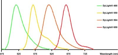 DyLight® - Goat polyclonal Secondary Antibody to Donkey IgG - H&L (DyLight® 550) (ab98821)