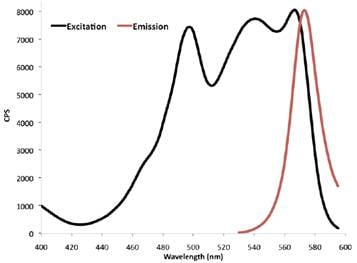 Flow Cytometry - Goat polyclonal Secondary Antibody to Rat IgG - Fc (PE) (ab99920)