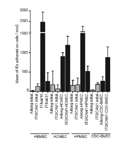 Inhibition Assay - Anti-ICAM1 antibody [15.2] (ab20)