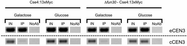 芯片抗-myc标签抗体[9E10] -芯片级(AB32)