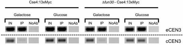 ChIP - Anti-Myc tag antibody [9E10] - ChIP Grade (ab32)