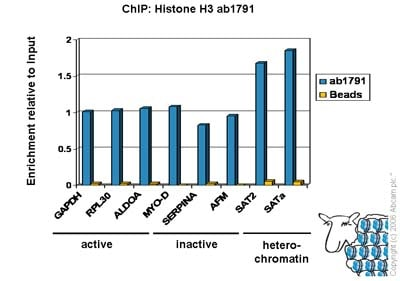 芯片- ChIP Kit(AB500)
