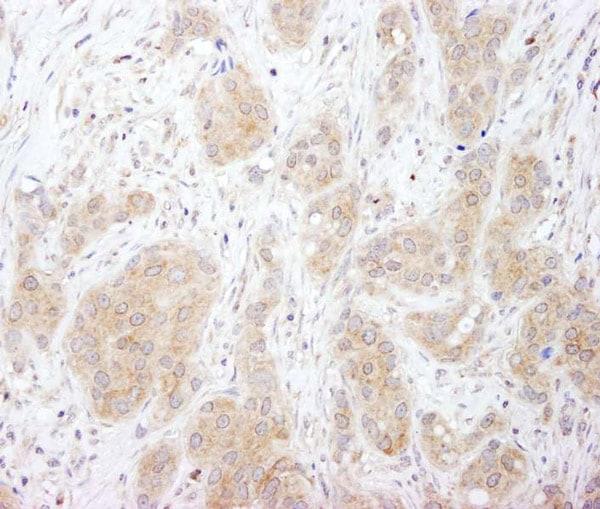 Immunohistochemistry (Formalin/PFA-fixed paraffin-embedded sections) - Anti-SNX1 antibody (ab995)
