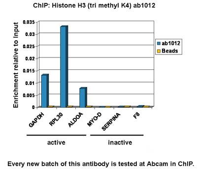ChIP - Anti-Histone H3 (tri methyl K4) antibody [mAbcam1012] - ChIP Grade (ab1012)
