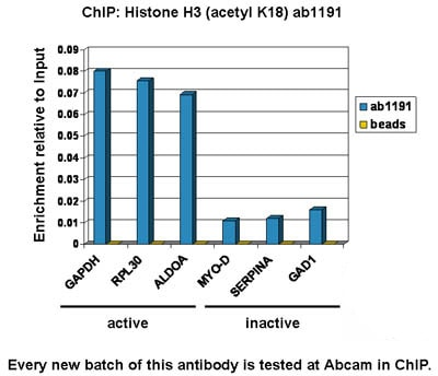 ChIP - Anti-Histone H3 (acetyl K18) antibody - ChIP Grade (ab1191)