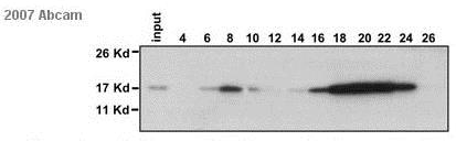 Western blot - Anti-Histone H2B antibody - ChIP Grade (ab1790)