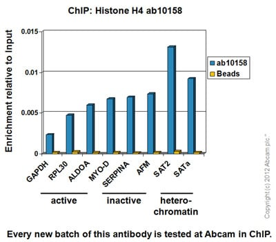 ChIP - Anti-Histone H4 antibody - ChIP Grade (ab10158)