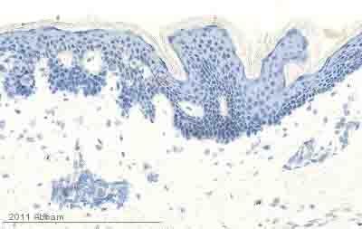 Immunohistochemistry (Frozen sections) - Anti-EGF antibody [EGF-10] (ab10409)