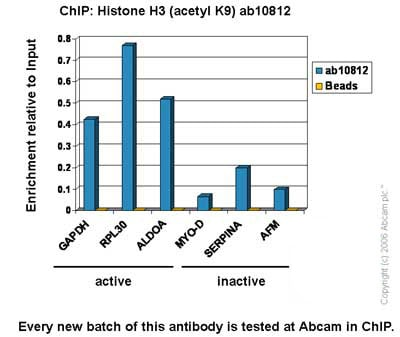 ChIP - Anti-Histone H3 (acetyl K9) antibody - ChIP Grade (ab10812)