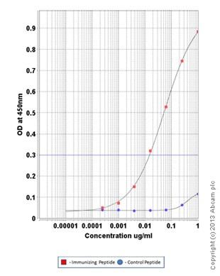 ELISA - Anti-Cofilin (phospho S3) antibody (ab100836)