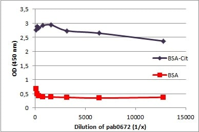 ELISA - Anti-Citrulline antibody (ab100932)