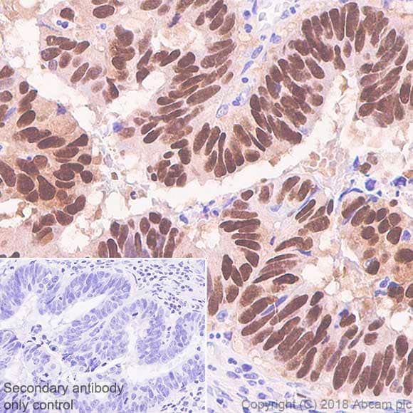 Immunohistochemistry (Formalin/PFA-fixed paraffin-embedded sections) - Anti-CDX2 antibody [SP54] (ab101532)