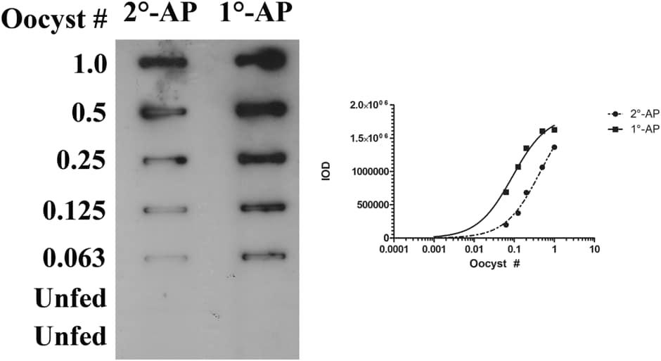 Alkaline phosphatase Conjugation Kit - Lightning-Link® labeling anti P. falciparum circumsporozite protein antibody for ECL slot blot assay