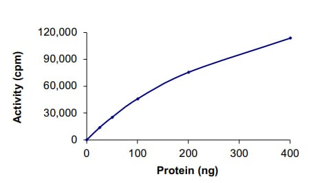 Functional Studies - Recombinant human CDK1 + CCNB1 protein (Tagged) (ab104618)
