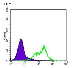 Flow Cytometry - Anti-RICTOR antibody [7B3] (ab104838)