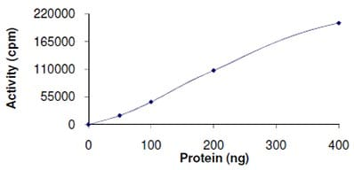 Functional Studies - Recombinant human WNK1 protein (ab105196)