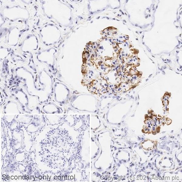 Immunohistochemistry (Frozen sections) - Anti-Nestin antibody [SP103] (ab105389)