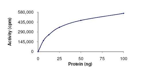 Functional Studies - Recombinant human ERK1 protein (ab105904)