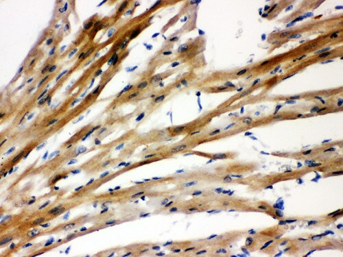 Immunohistochemistry paraffin embedded sections - Anti-Presenilin 2/AD5 antibody (ab106351)