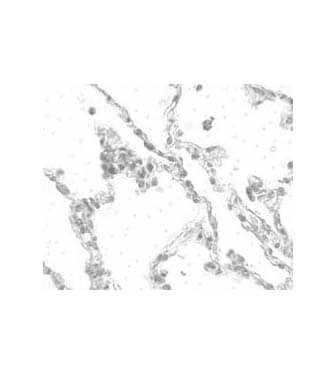 Immunohistochemistry (Formalin/PFA-fixed paraffin-embedded sections) - Anti-TMEM184B antibody (ab106688)