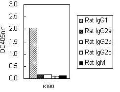 ELISA - Mouse monoclonal [KT96] Anti-Rat IgG1 H&L (HRP) (ab106753)