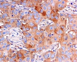 Immunohistochemistry (Formalin/PFA-fixed paraffin-embedded sections) - Anti-BPR antibody [EPR5201] (ab108346)
