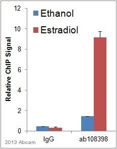 ChIP - Anti-Estrogen Receptor alpha antibody [EPR4097] - ChIP Grade (ab108398)
