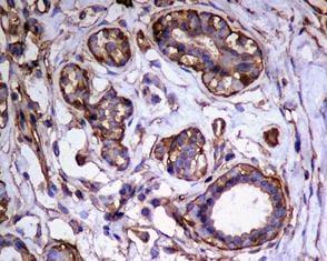 Immunohistochemistry (Formalin/PFA-fixed paraffin-embedded sections) - Anti-FKBP6 antibody [EPR3673] (ab108419)