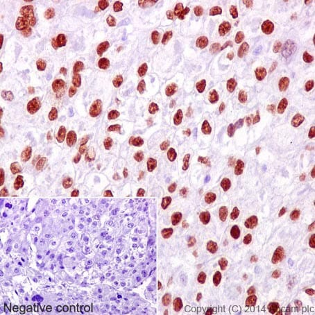 Immunohistochemistry (Formalin/PFA-fixed paraffin-embedded sections) - Anti-FOXA2 antibody [EPR4466] (ab108422)