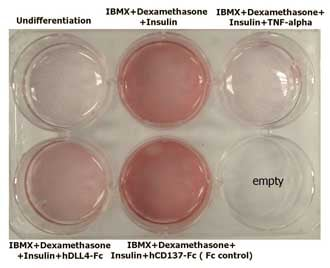 Functional Studies - Recombinant human DLL4 protein (Fc Chimera Active) (ab108557)