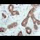 Immunohistochemistry (Formalin/PFA-fixed paraffin-embedded sections) - Anti-EPF antibody [EPR4476] (ab108600)