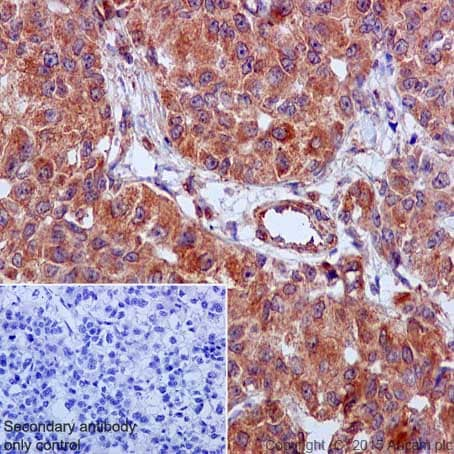 Immunohistochemistry (Formalin/PFA-fixed paraffin-embedded sections) - Anti-GRP78 BiP antibody [EPR4041(2)] (ab108615)