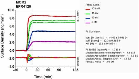 OI-RD Scanning - Anti-MCM2 antibody [EPR4120] (ab108935)