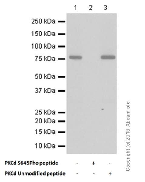 Western blot - Anti-PKC delta (phospho S645) antibody [EP1486Y] (ab108972)