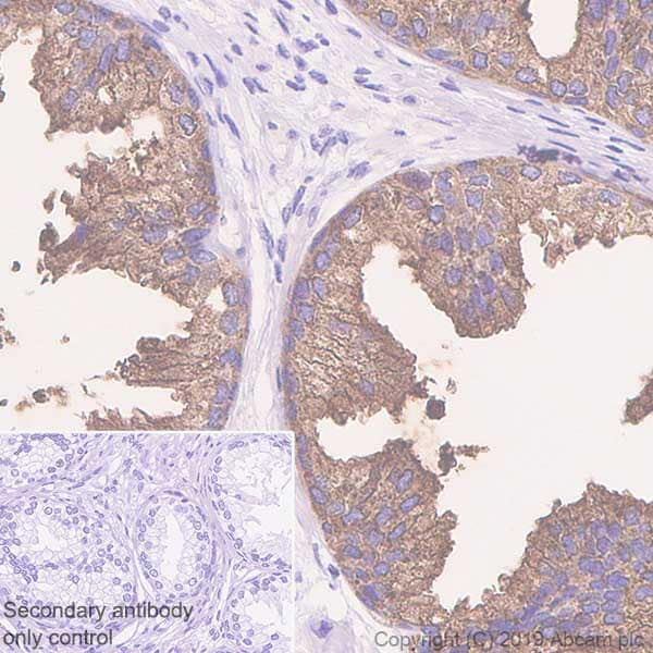 Immunohistochemistry (Formalin/PFA-fixed paraffin-embedded sections) - Anti-PAP antibody [EPR4067] (ab109004)